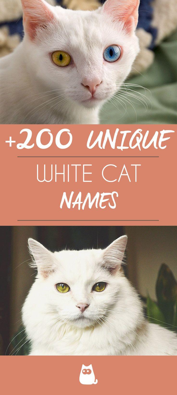 White Cat Names Male and Female Cat names, Cute cat