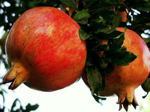 rosh hashanah pomegranate blessing