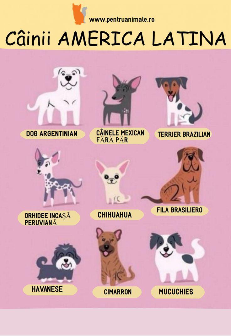 Știi ce câini sunt din America Latină? Iată un infografic în care sunt ilustrați. #pentruanimale