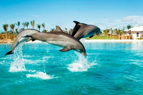 Dolphin Bay, is one of the best things to see in Dubai, United Arab Emirates. Check out reviews, ratings, photos & more at Triphobo.Com