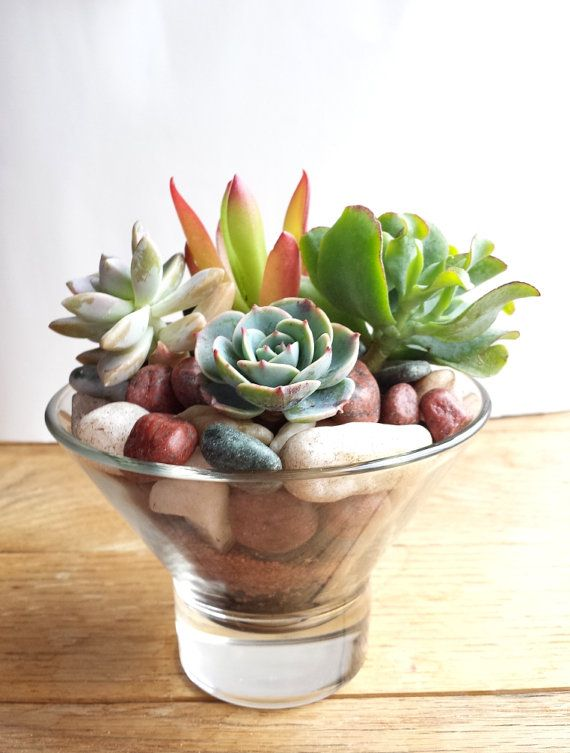Succulent Arrangement  Hello Spring by 2CraftyCougs on Etsy, $23.00