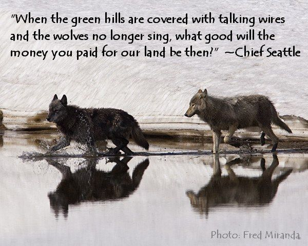 Wolf Quote 5. Wolf quotes on PictureQuotes.com.