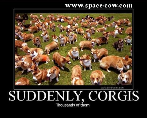corgi funny pictures   Thousands of corgis ~ Funny pictures- O.M.G. If I were around thousands of corgis I would be in heaven!