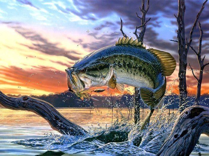 bass fishing - tomorrows adventures   tomorrows adventures