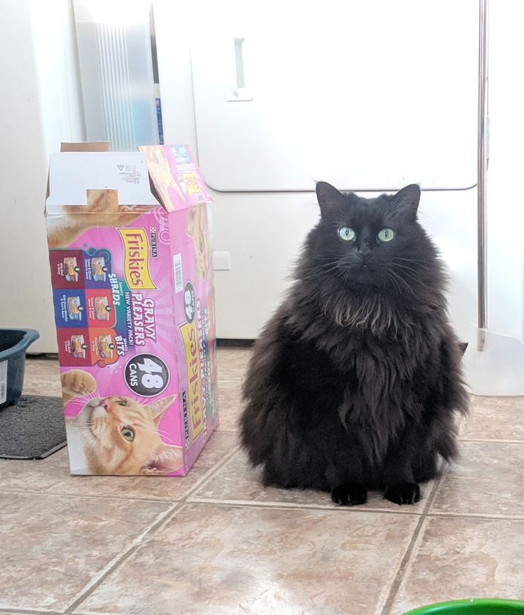 Winter coat totally not fat at all. 48 pack of Friskies for scale. (imgur.com) submitted by IIRasta to /r/Delightfullychubby 2 comments original  view this image at imgur.com - #Funny #Cats - Cute Kittens - LOL #Purrito Memes - #Pets in Clothes - Kitty Breeds - Sweet Animal Pictures by Visualinspo