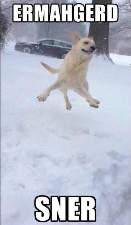 Snow dog #Christmas #Meme #Funny