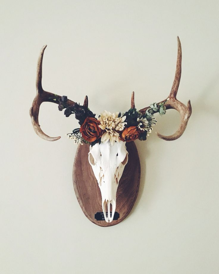 Deer crown european mount taxidermy pinterest fall for Antler decorations for home