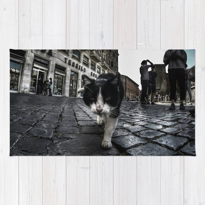 Close up portrait of a tough street cat in the city of Rome.  #cat #streetcat #animal #streetphotography #photography #gopro #wideangle #street #city #cityphotography #rome #italy #rug #homedecor