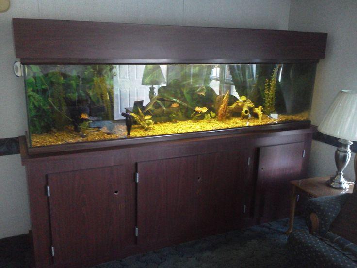 108 Best Aqarium Images On Pinterest Fish Tanks Fish Aquariums And Aquarium Ideas