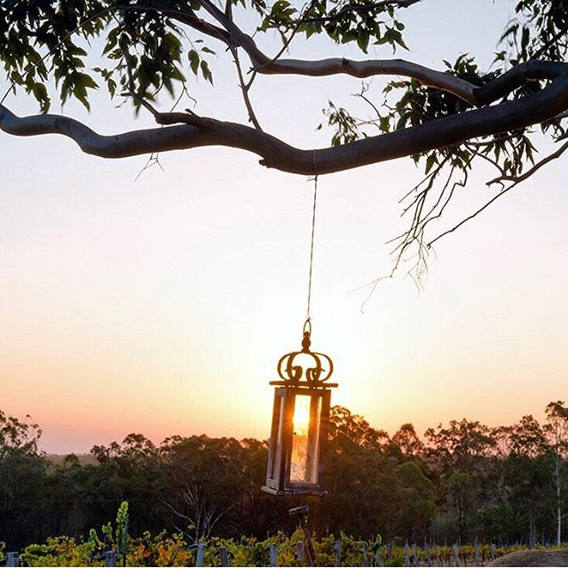 Capturing the sun as it sets over the vines at Spicers Vineyards Estate #spicersretreats #spicersvineyardsestate