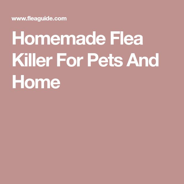 Homemade Flea Killer For Pets And Home