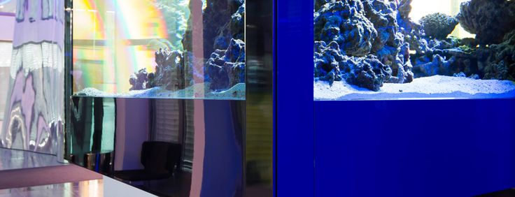 Meerwasser - Aquarium Empfangshalle, München  540 x 120 x 140 #AquariumWest  Premium-Aquariumbau www.aquariumwest.de #Meerwasseraquariumpodcast  # MarkusMahl  #aquariummuenchen #meerwasseraquarium #aquariumwartung #designaquarium #aquariumbau #meerwasseraquaristik #reeftank #reefbuilders #reefdesign