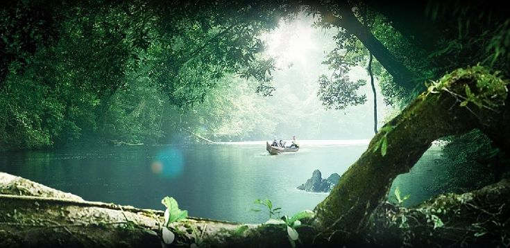 Travel in Malaysia:Taman Negara national park