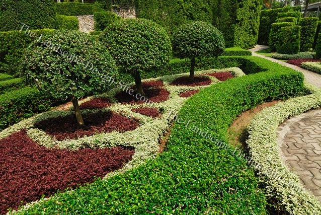 Formal evergreen trees small ornamental trees in formal for Small bushes for landscaping