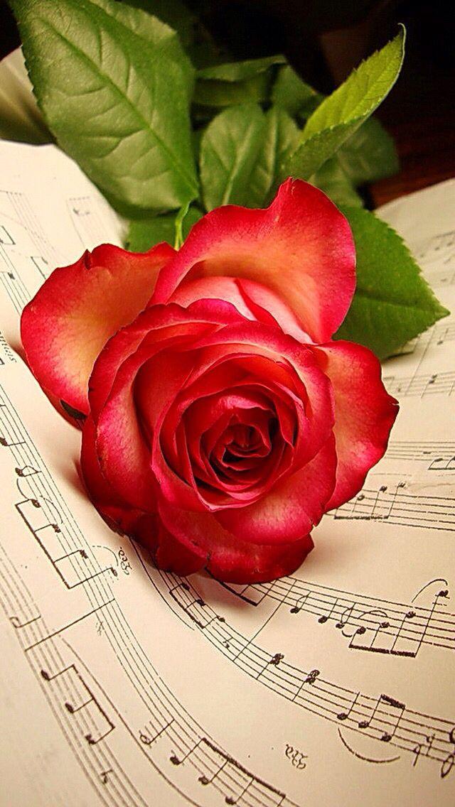 Открытку лет, цветы открытки музыкальные
