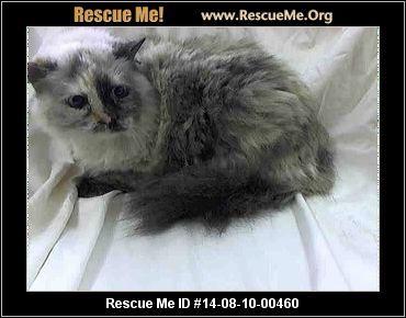 ― New Jersey Siamese Rescue ― ADOPTIONS ―RescueMe.Org