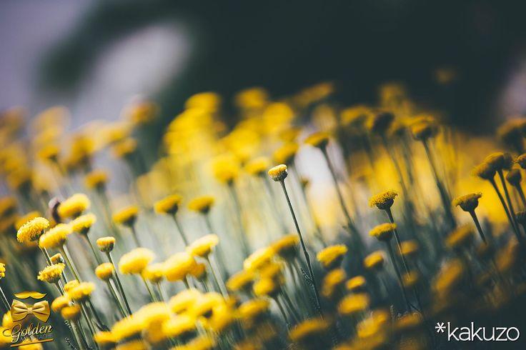 #belanidia #flowers