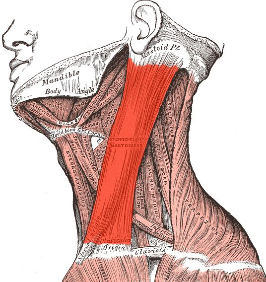 Sternocleidomastoid - Say What?