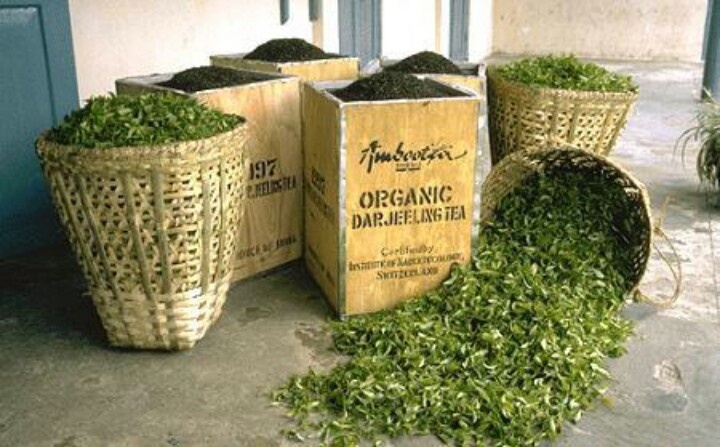 Organic darjeeling tea. Oh, to be here with a scoop and a big bag!