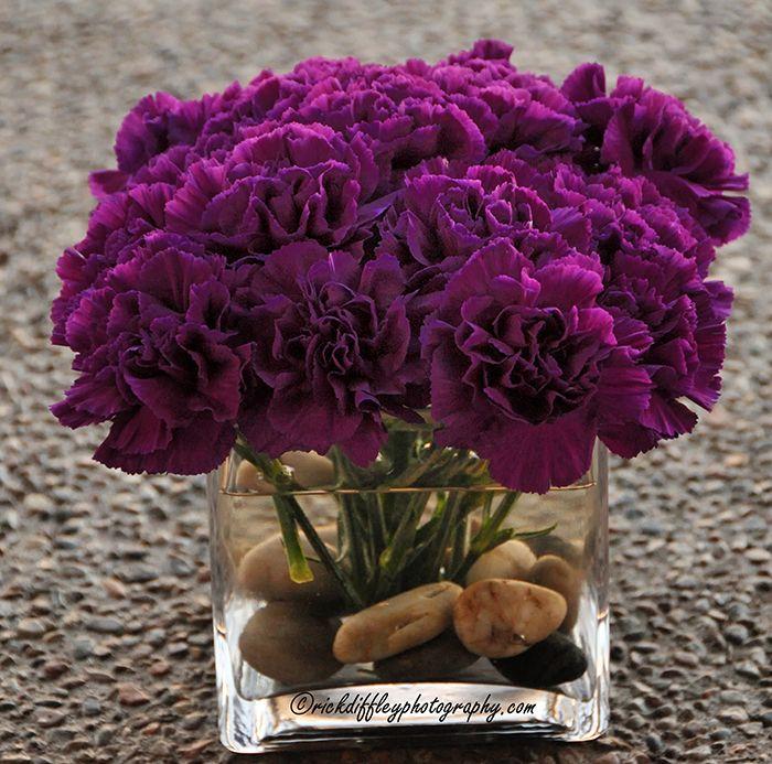 CARNATIONS: Squares Vase