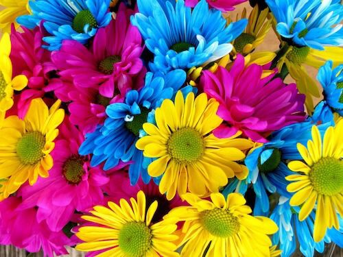 Colourful Daisies from Husband