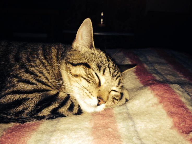 Durmiendo namaste