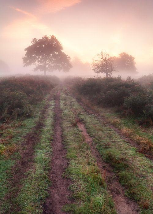Magical landscapes #freemanAutumn