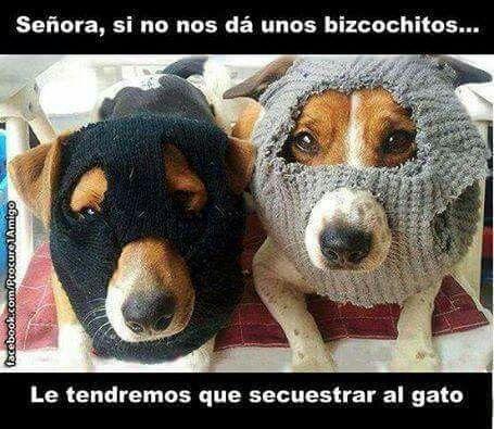 risa!!!! #compartirvideos.es #videosdivertidos