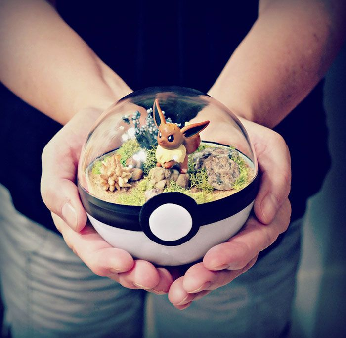 poke-ball-terrarium-pokemon-the-vintage-realm-1-57f3a823b60cf__700                                                                                                                                                                                 Plus
