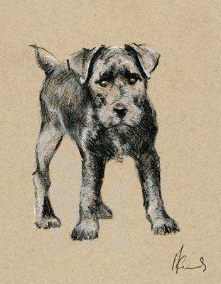 One, Two,Three Pounce, Patterdale Terrier print by Malcolm Coward - Hector!