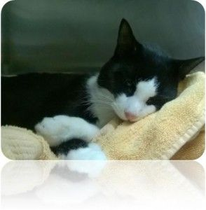 *SPECIAL PLEA* 10/04/15 - ***MUST LEAVE TONIGHT AT 6PM!!!! NEEDS LOCAL VET!!!*** Meet sweet Lamprey!!! He needs a local vet tonight for x-rays and full work up!!!