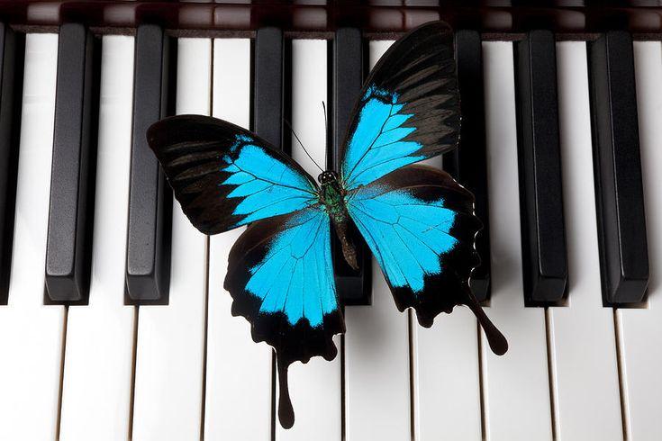 Blue Butterfly On Piano Keys by Garry Gay