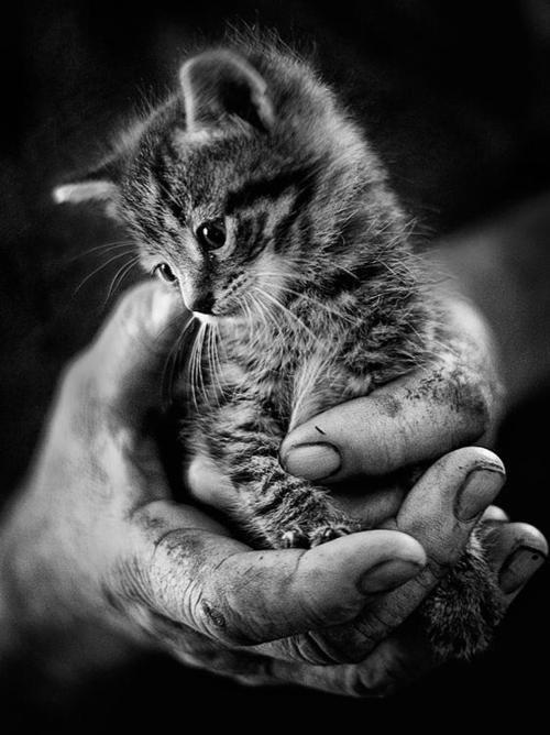 Handful of kittyCat, Hands, Pets, Baby Kittens, Black White, White Photos, White Stuff, Kitty, Animal