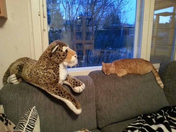 Kissat päivälevolla