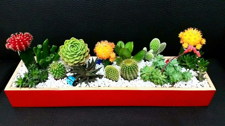 Succulent and cactus arrangement idea. Arreglo de cactus y suculentas.