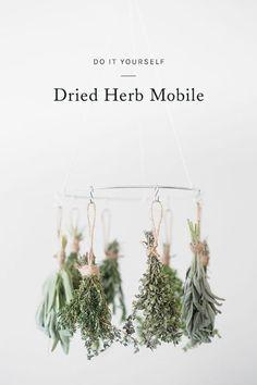 Dried Herb /