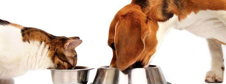Οδηγός διατροφής για γάτες και σκύλους από το Petshop88