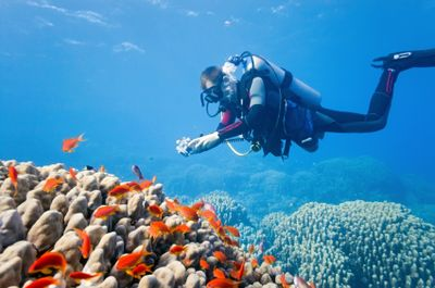 Dangerous Fish and Sea Animals: 2. Coral - Dangerous If Touched
