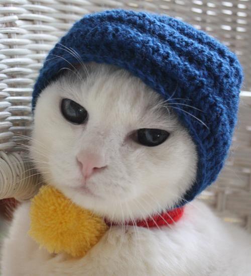beanie cat