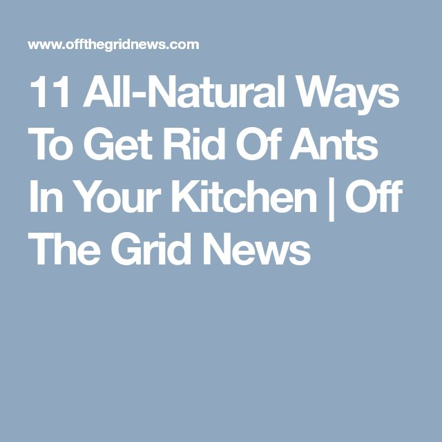 how to get rid of ants in your kitchen fast