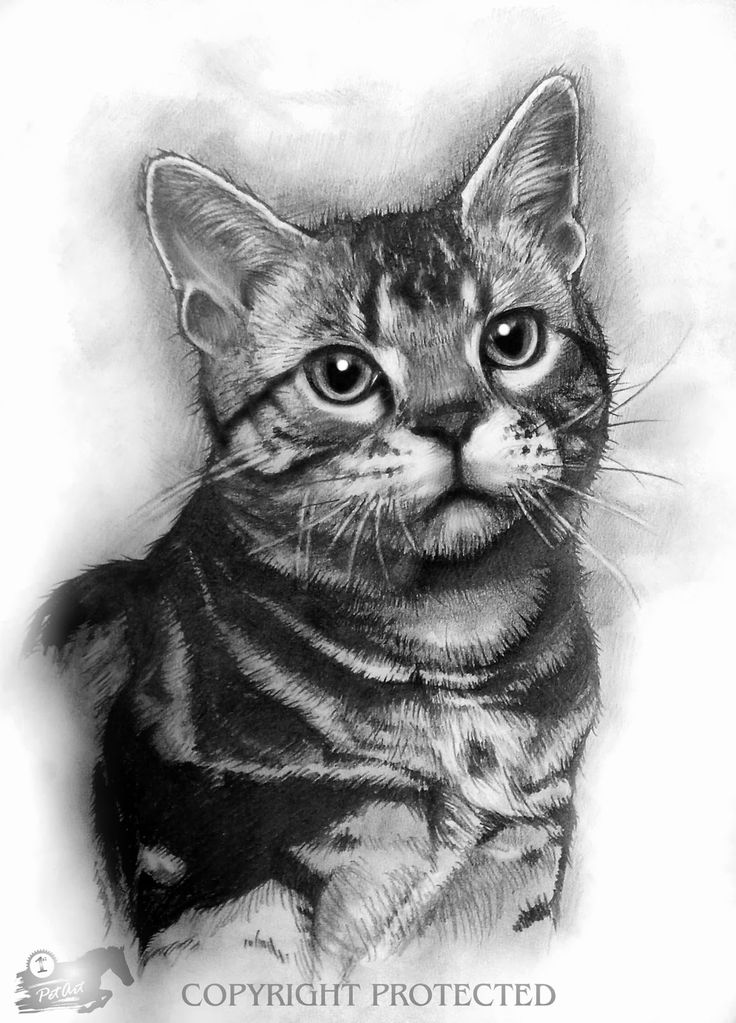 photo realistic animals drawings Google Search Katten