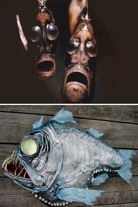 Weird Sea Creatures Hatchetfish Like from that center of the earth movie...