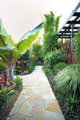 Bali garden makeover - Abyssinian banana tree on the left side of the walkway