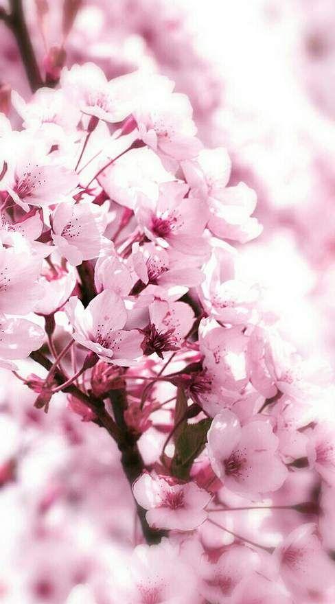 nails spring 2016 color trends nails spring 2016 color trends