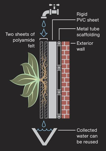 How Green Walls Work Illustration by Jason Treat, National Geographic. Many living wall systems also have built-in irrigation systems in which water is harvested at the bottom of the wall and recirculated back to the top.The types of plants on green walls differ, but can include grasses, vines, and other climbing plants—all of which must have strong root structures, Green Roofs for Healthy Cities'.