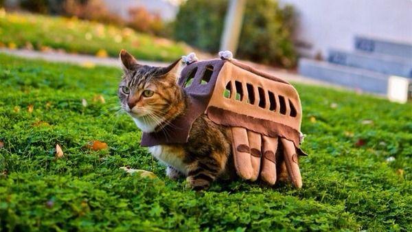 cat bus cosplay! <3