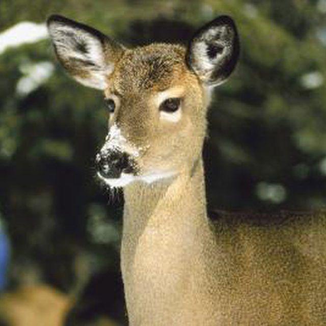 Homemade Automatic Deer Feeder