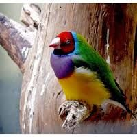 Afbeeldingsresultaat voor Tropische Vogels