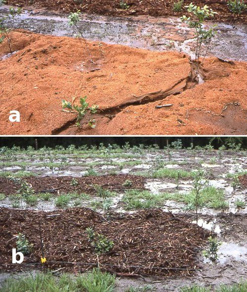 Garden Mulch Ideas im going to pull out all of my old landscaping redo with black Sawdust Sawdust Is Chemically Similar To Other Wood Products But Because It Is So Finely Mulch Ideasgarden