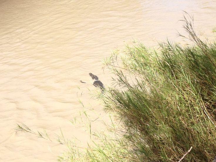 We saw 16 salt water crocs in the wild!